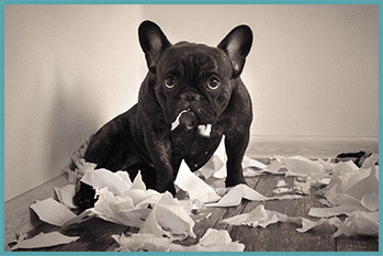 dog chewing up papers